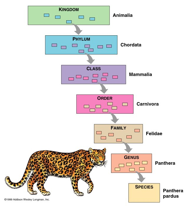 Animal Taxonomy (Animal Trees) (1/6)