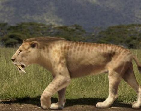 the age of the mammals from 65 million years ago mya