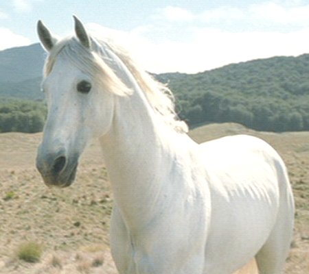 Lord Of The Rings Shadowfax Breed