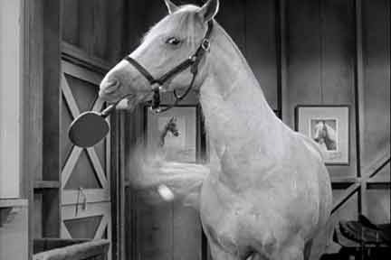 Horses In Movies  Phar Lap, War Horse & Others. University For Game Design Uofl Speed School. Dentist In Amarillo Texas Banner Ad Campaigns. Sample Landing Page Template. Wilmington Used Car Dealerships. Cracks In The Foundation Files Storage Online. Web Development Certificate Programs. Crema Para La Irritacion Honda S2000 Roadster. Invesco Diversified Dividend Fund