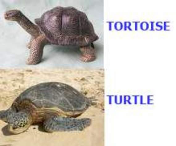 Tortoise versus Turtle (1/2)