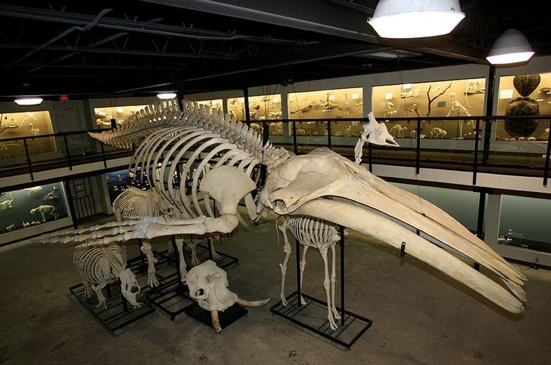 Skeletal System  U2013 Skeletons  Joints  U0026 Bones  U2013 Part Two