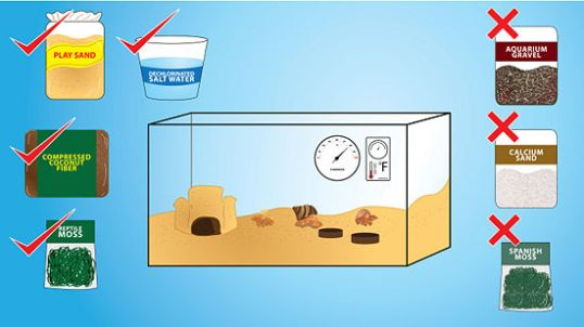 Hermit Crab tank