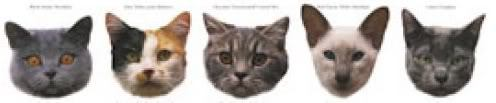 cat-divider