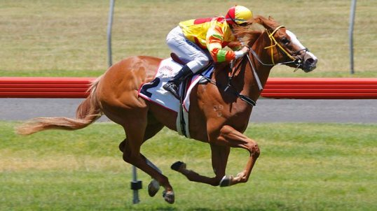 Miracles of Life racehorse