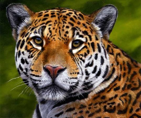 Jaguar painting by Jason Morgan