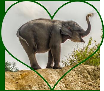 Help Sumatran Elephants And Orang Utans The Story Of Bona Fascinating Animals