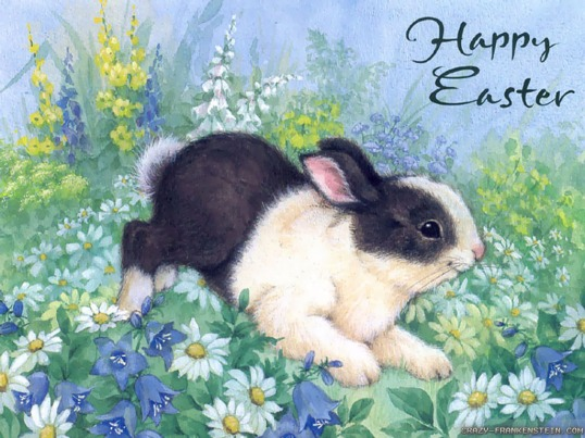easter-bunny-card-with-daisies-easter-greetings