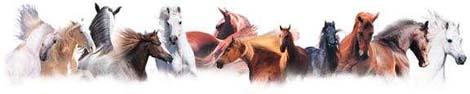 horses-divider