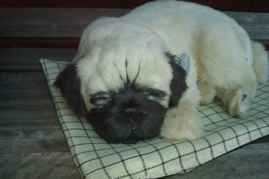 Perfect Petzzz Pug