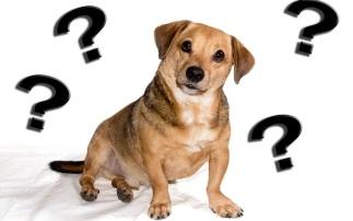 dog puzzled