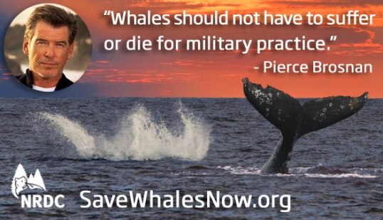 save whales poster