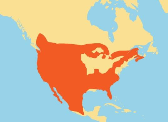 bobcat-range-map
