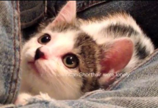 Niko the cat