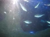FishatAQWA