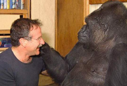 Robin_Williams-with-Koko-the-Gorilla