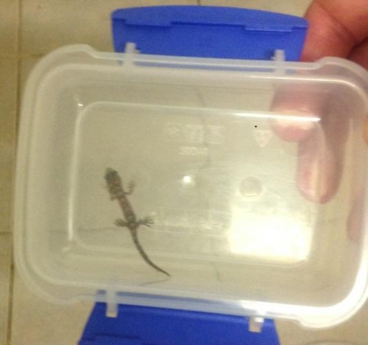 BabyGecko1