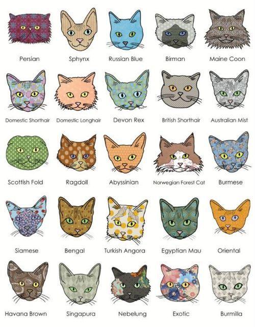 cat_types