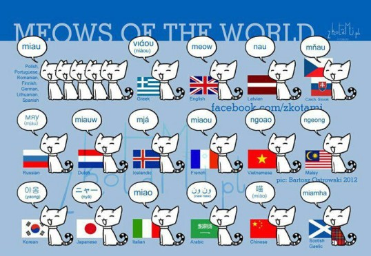 meows_of_the_world