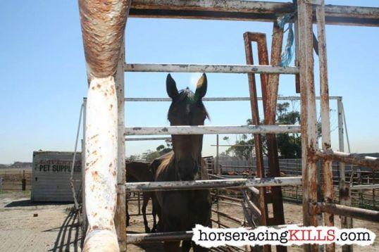 horse_racing_kills