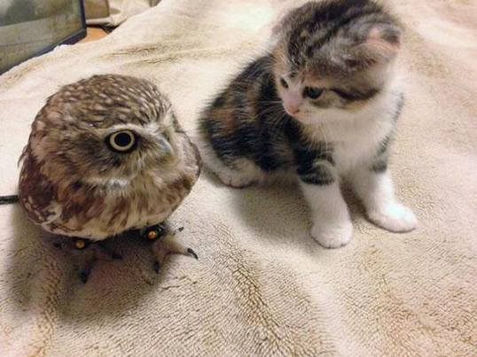 owl_and_pussycat1