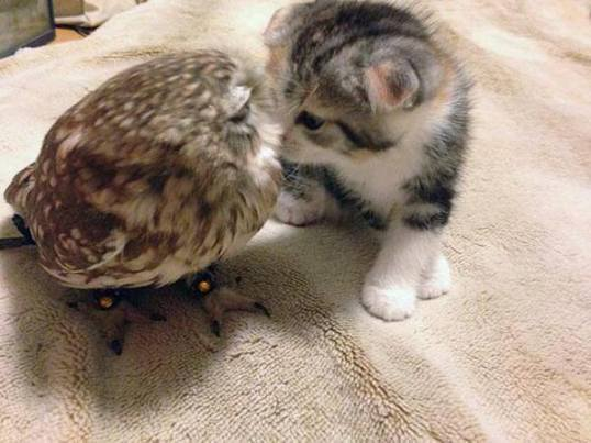owl_and_pussycat2