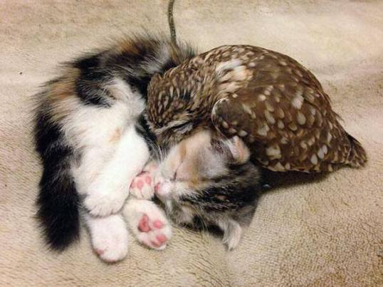 owl_and_pussycat3