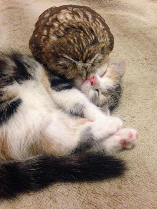 owl_and_pussycat4