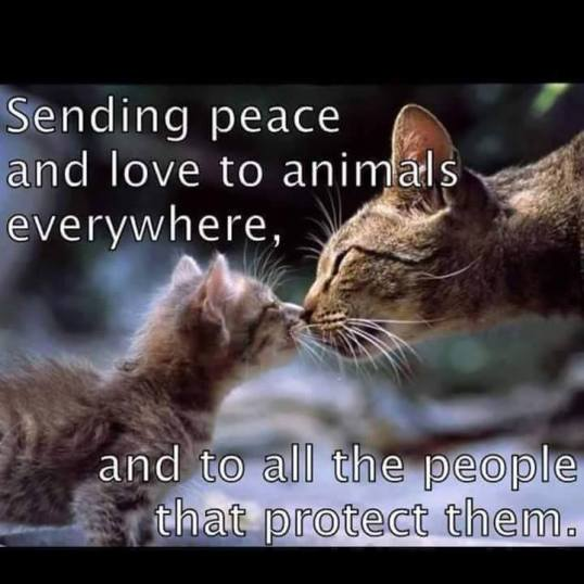 peace to animals