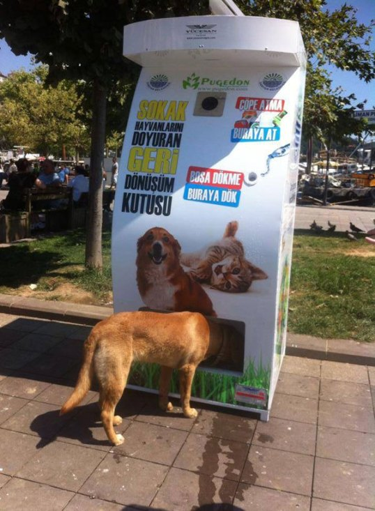 vending-machine-feeds-stray-animals-in-exchange-for-recycled-bottles-1