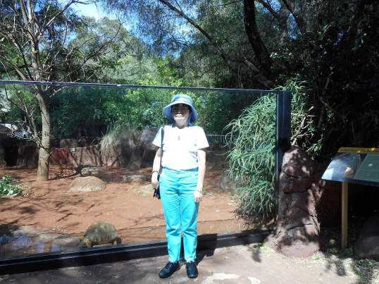 FRONT OF TORTOISE ENCLOSURE