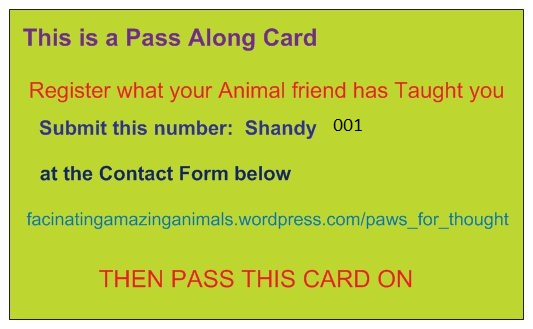 PAWS FOR THOUGHT PASS ALONG CARD -  BACK NUMBER 1