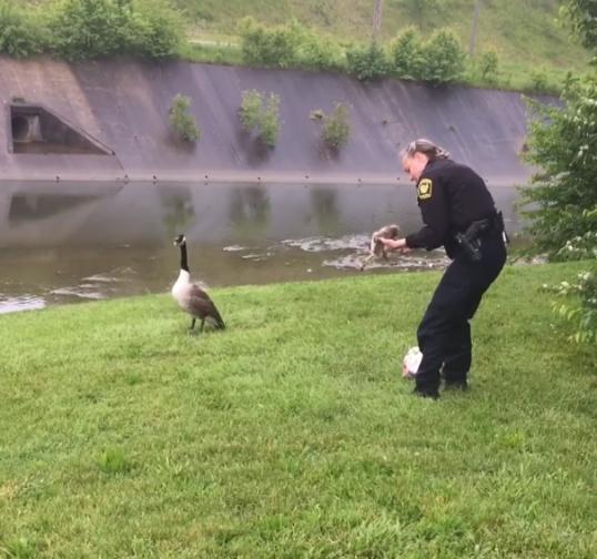 goose-asks-help-police-4