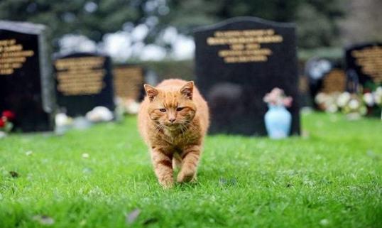 Barney_cat